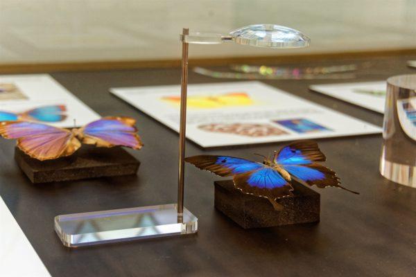Des papillons dans un musée