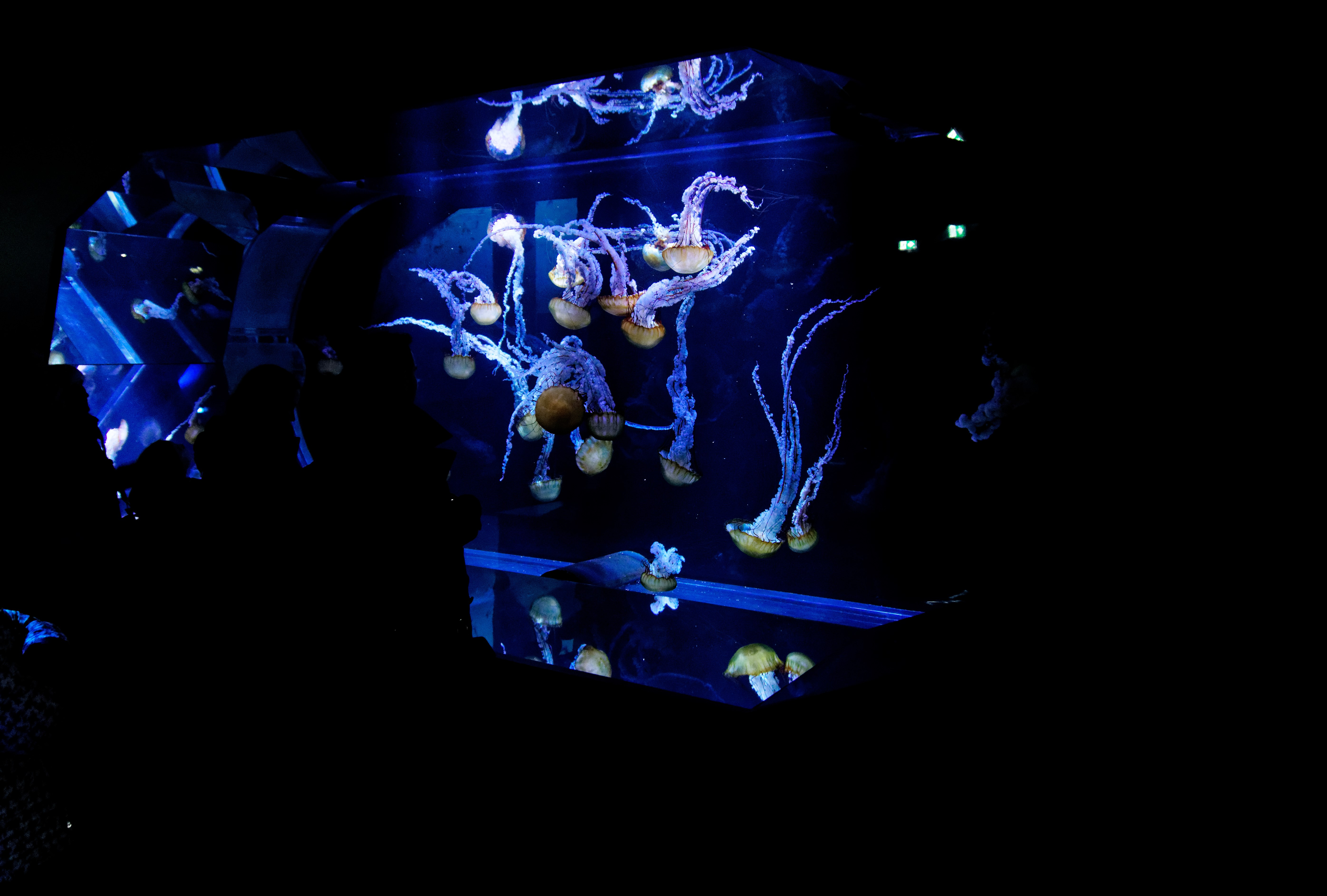 aquarium méduse nausicaà boulogne sur mer