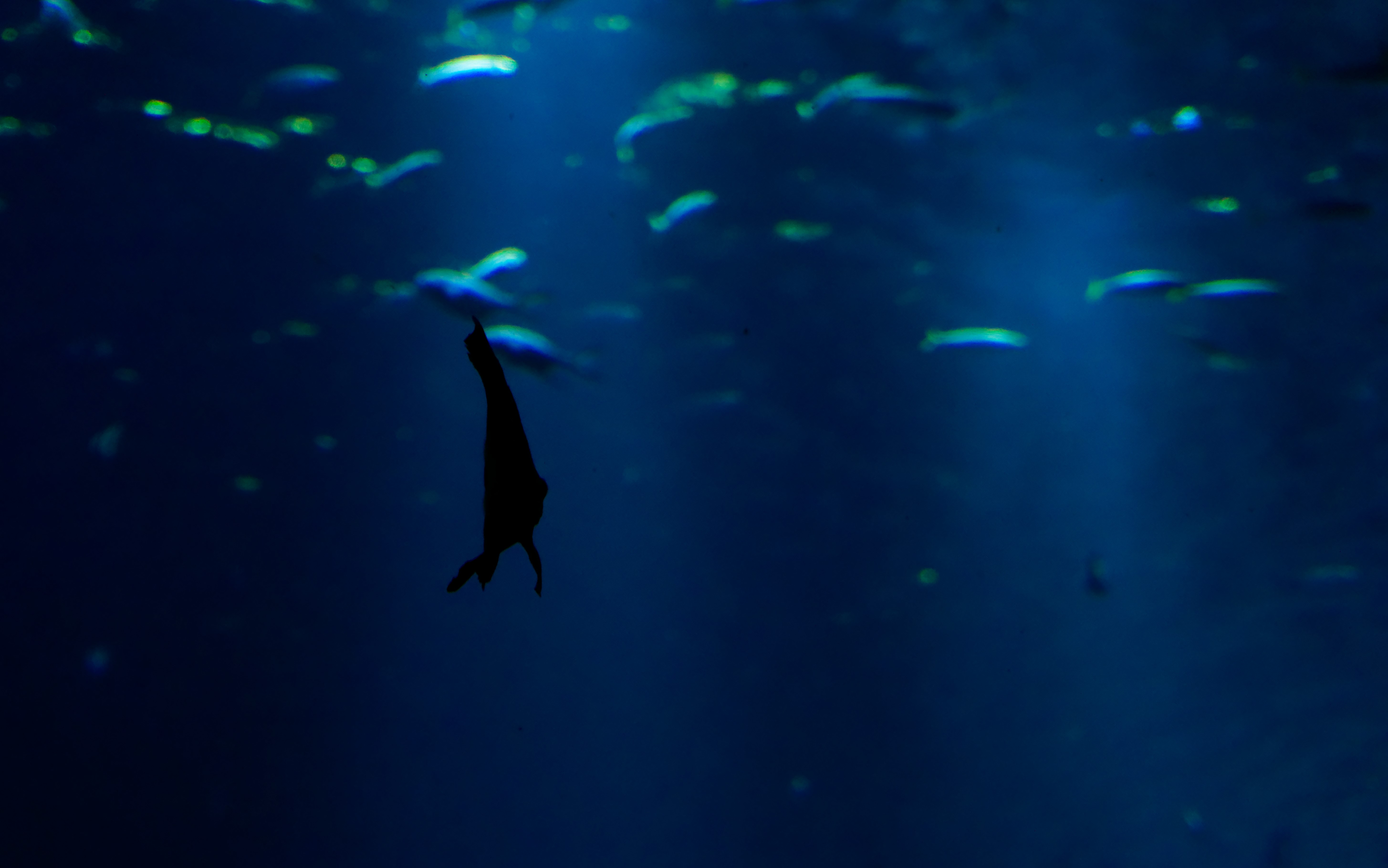 ombre poisson couleur bleu nausicaà ocean