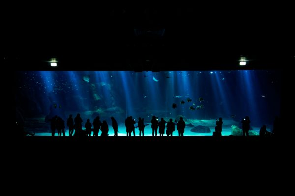 Immersion à Nausicaà