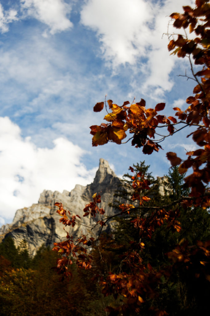 sixt-fer-a-cheval-vue-details-automne-cirque-samoens