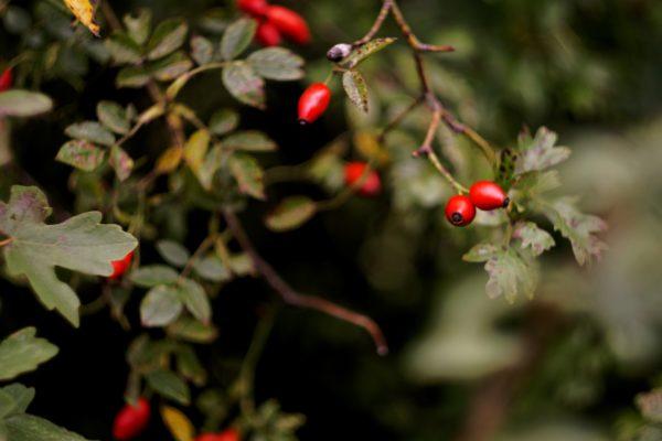 Cuisiner des plantes sauvages, dans le Jardin d'Hélène
