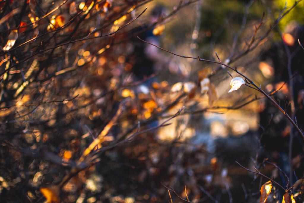 feuilles-nature-details-close-up-vercors-alex-stories