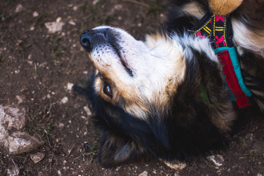 eflamme-repos-cani-rando-atlas-for-men