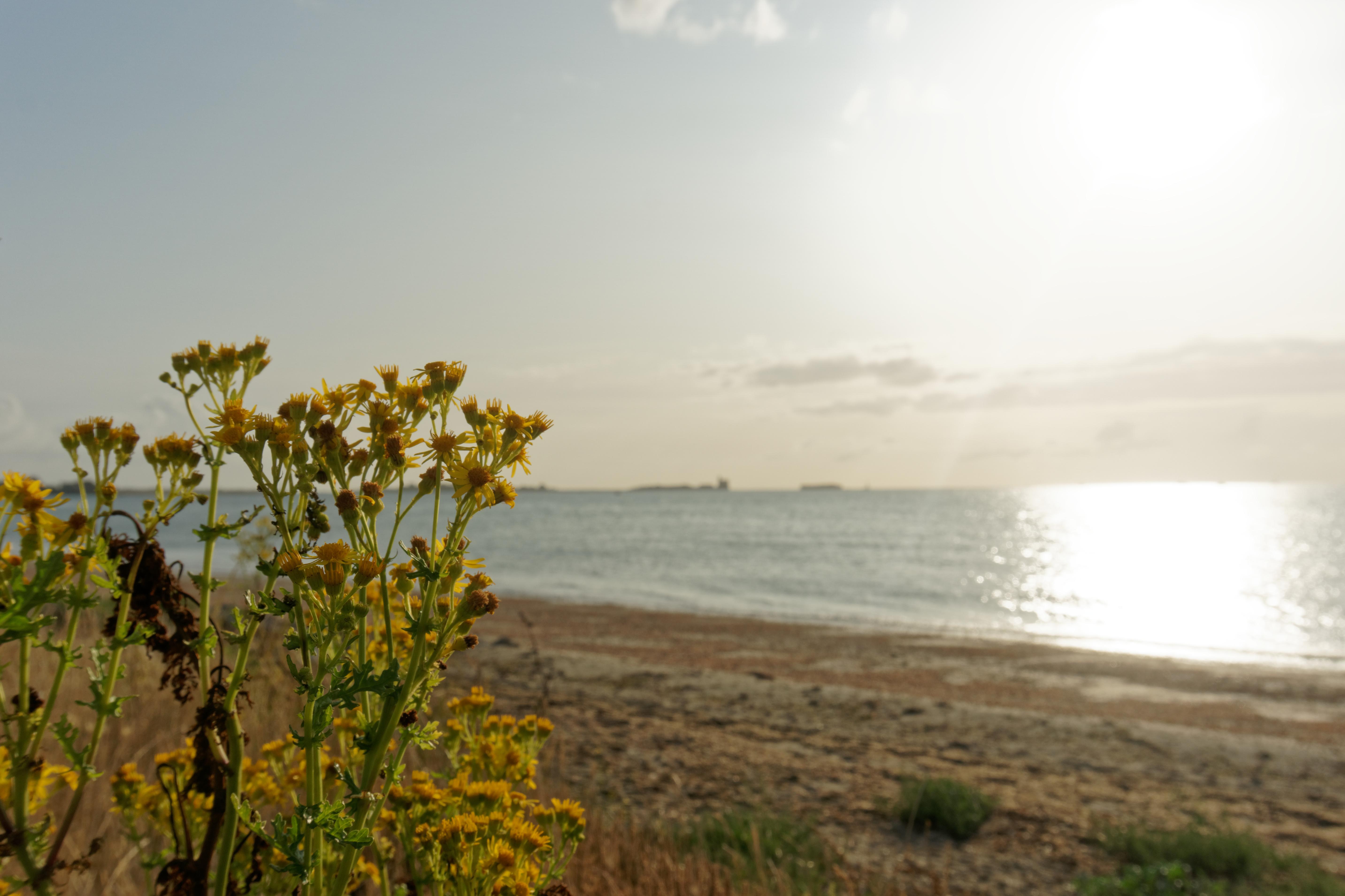 depuis-les-fortifications-vauban-petit-dejeuner-avec-le-lever-du-soleil-a-saint-vaast-la-hougue