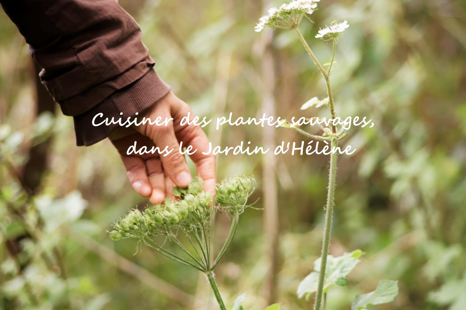 cuisiner-des-plantes-sauvages-slow-tourisme-jardin-d-helen-a-proisy-thierache-aisne-slow-tourisme-02