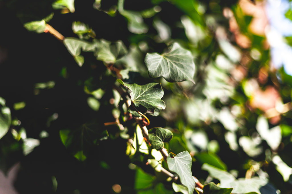 photographie-nature-alex-stories-blog-mots-et-photos